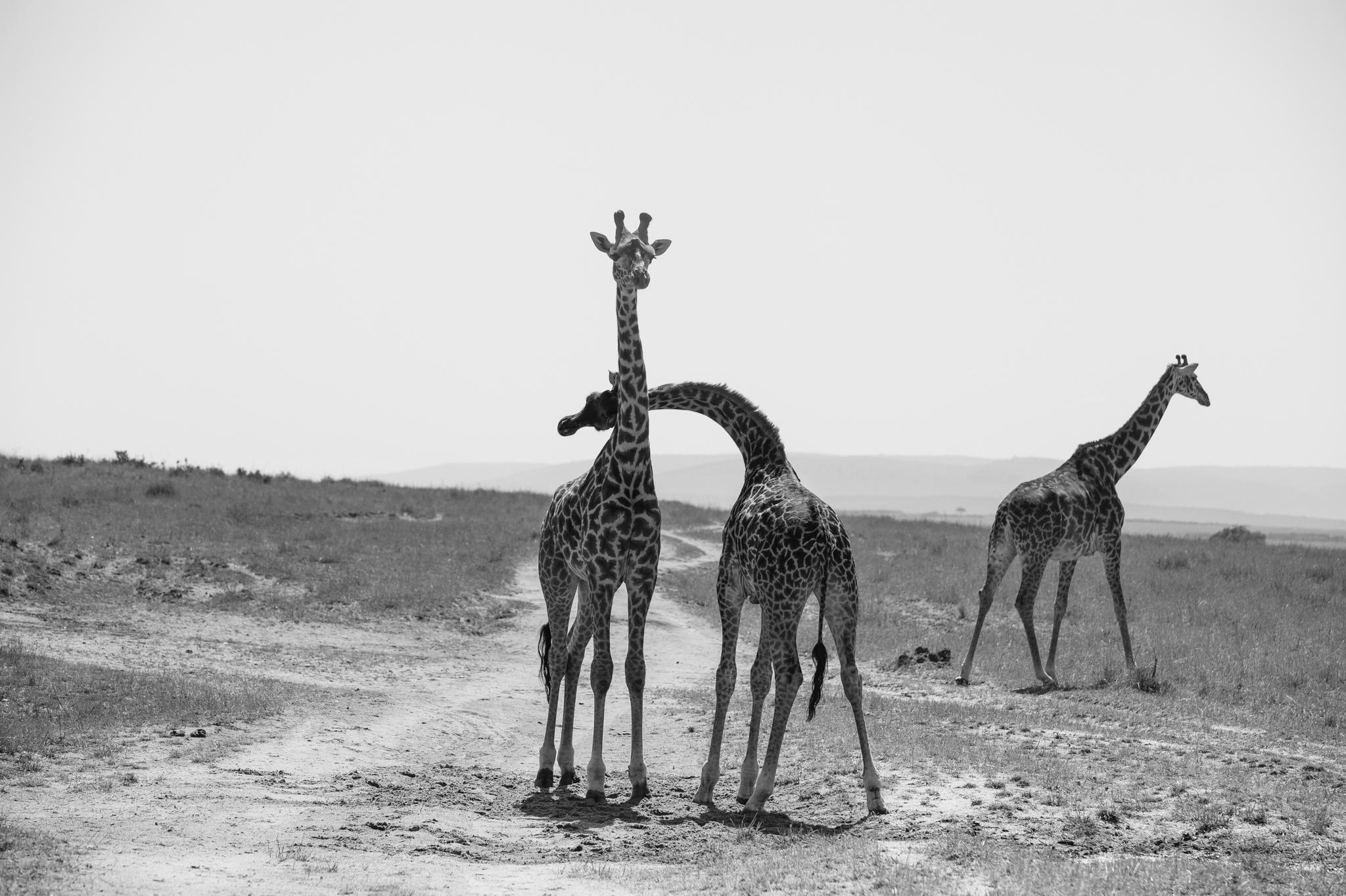Kenya-104.jpg