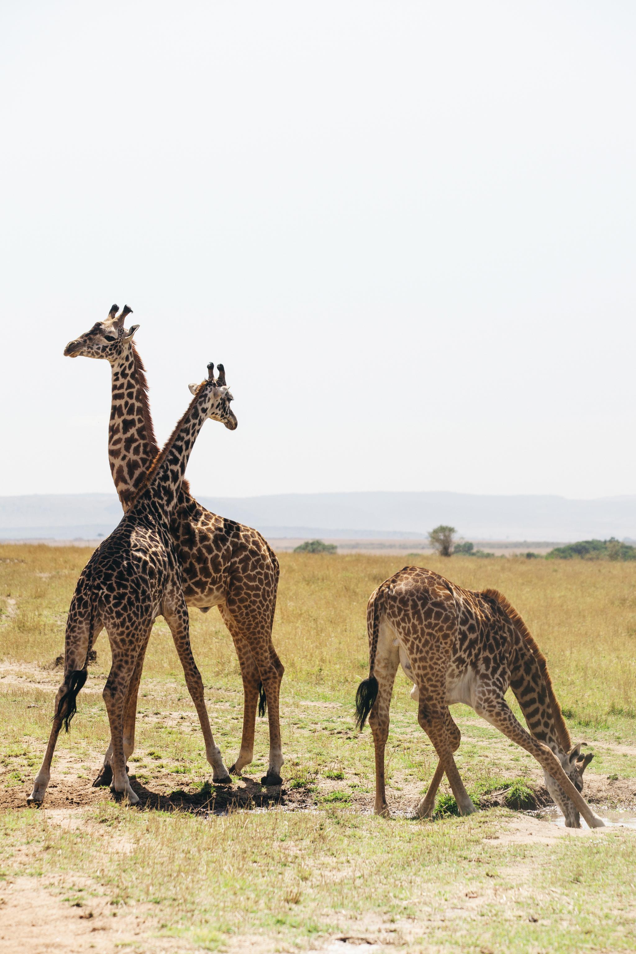 Kenya-107.jpg