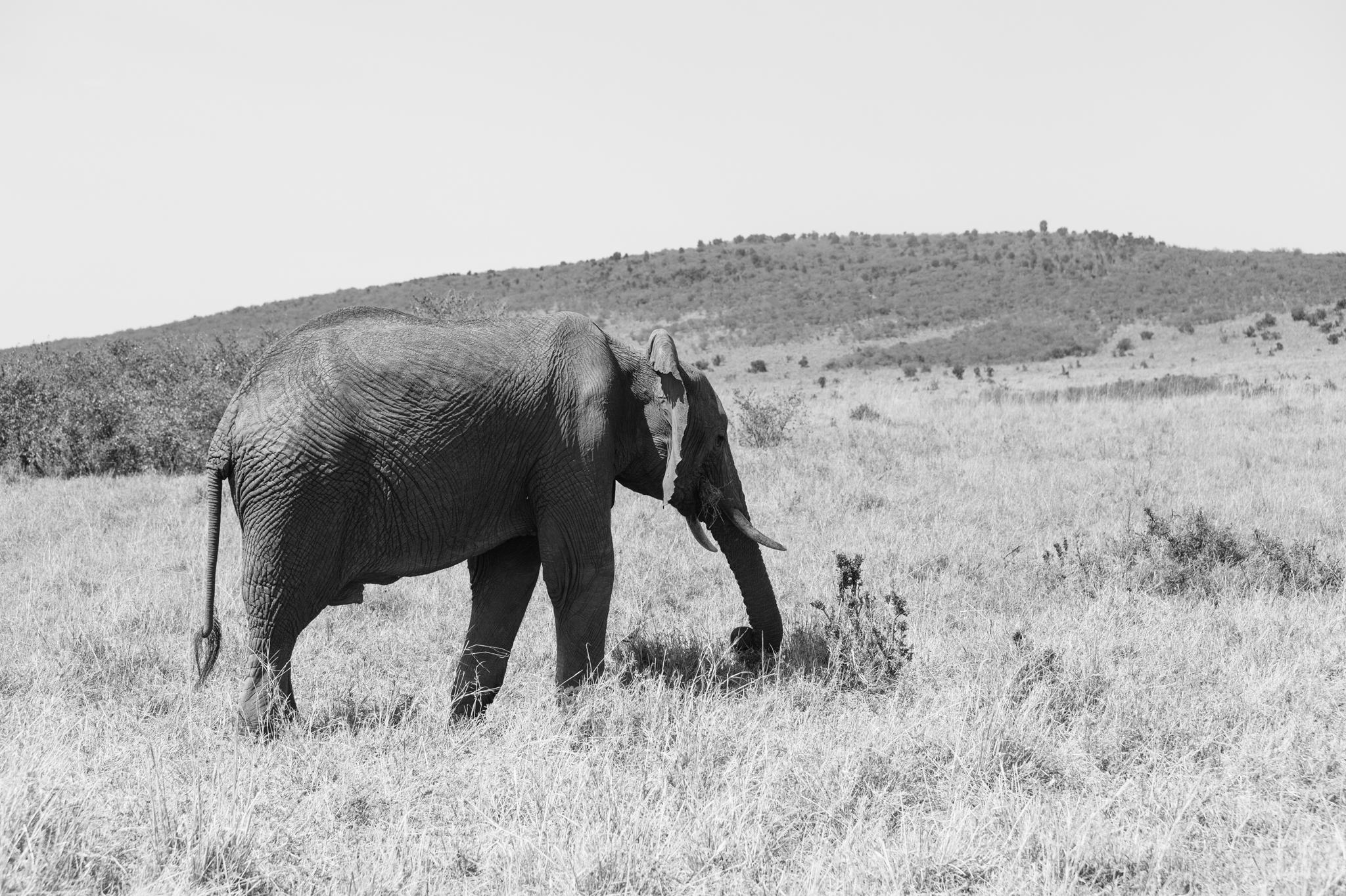 Kenya-110.jpg