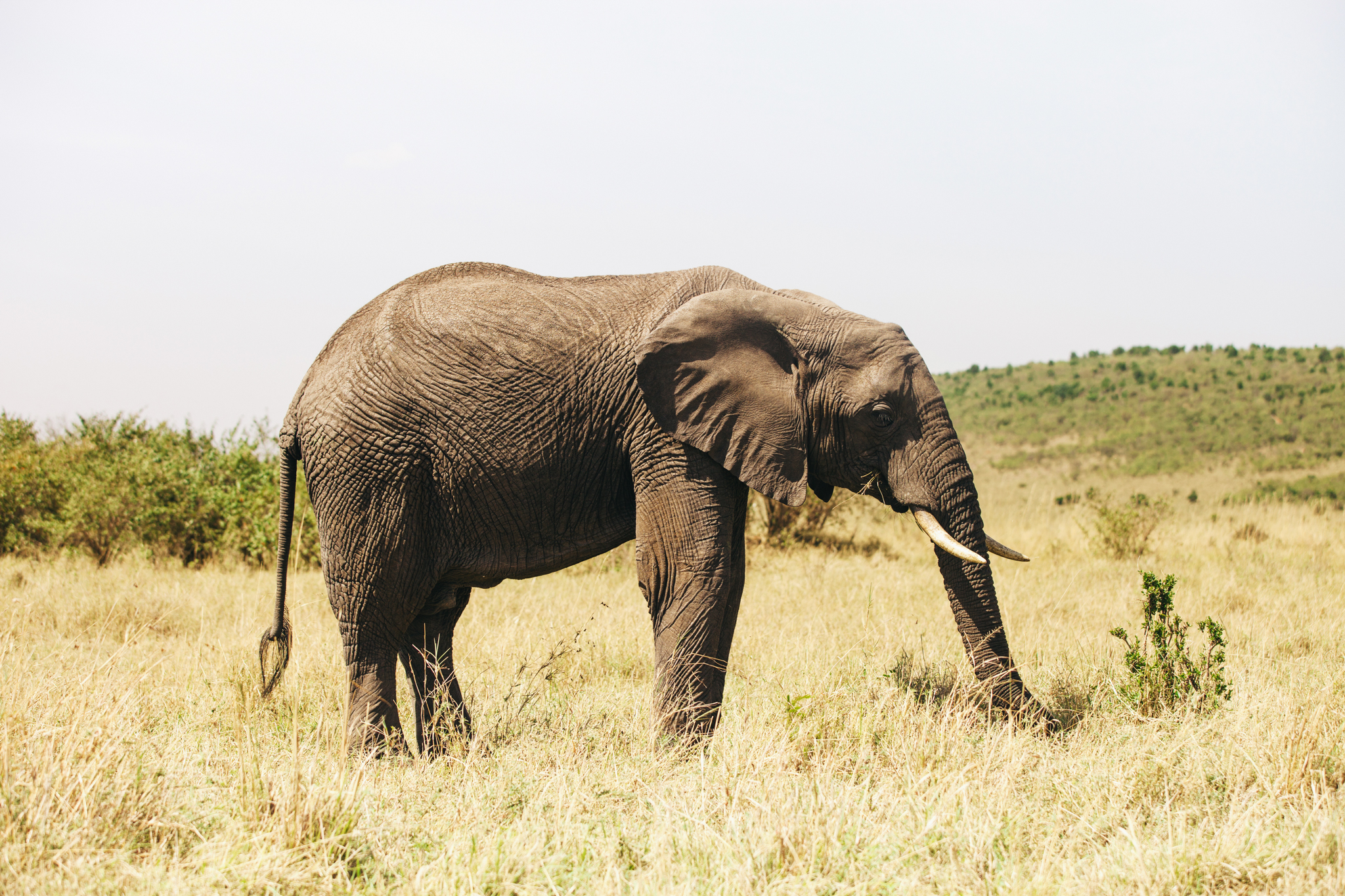 Kenya-111.jpg