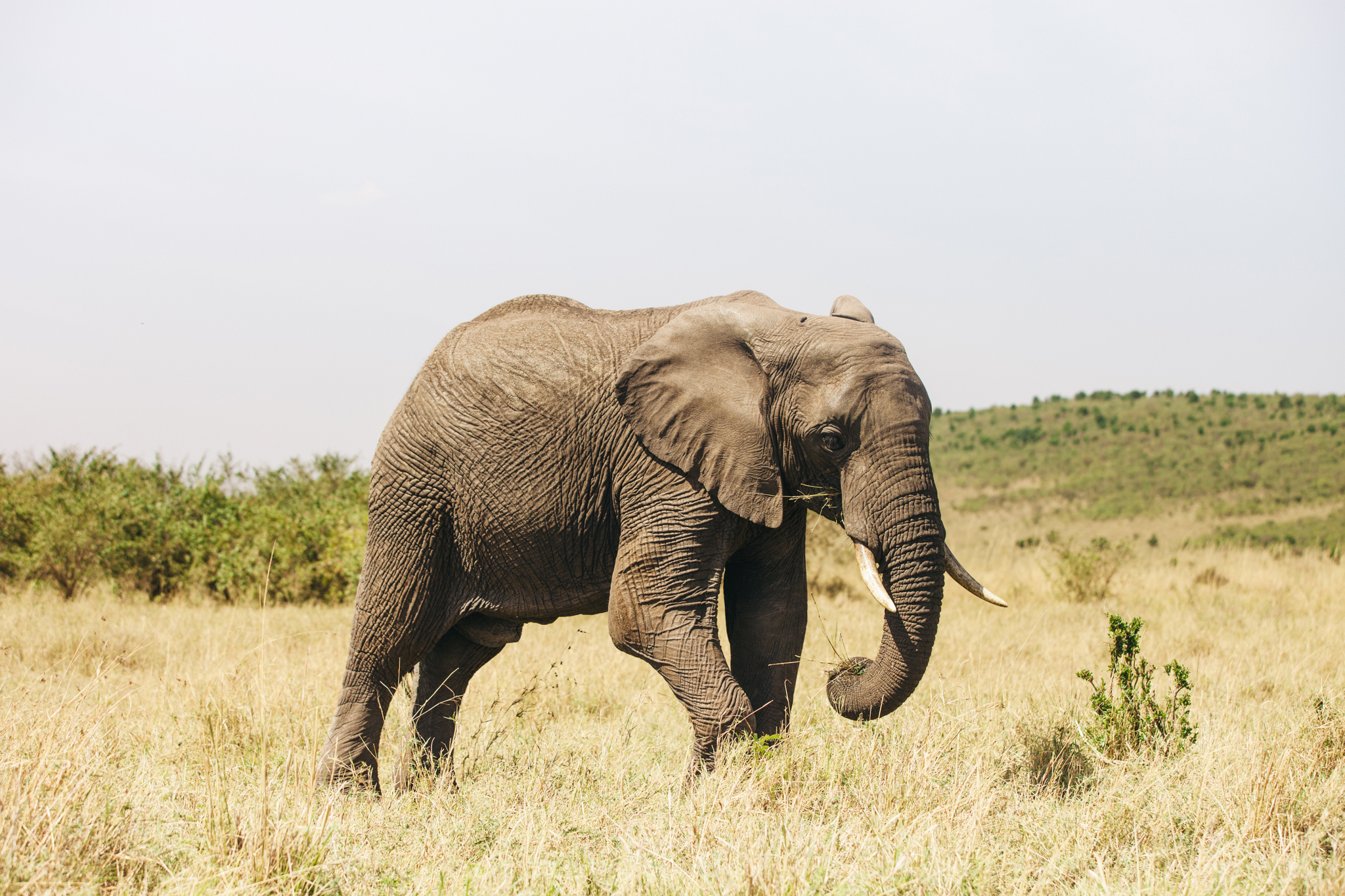 Kenya-112.jpg