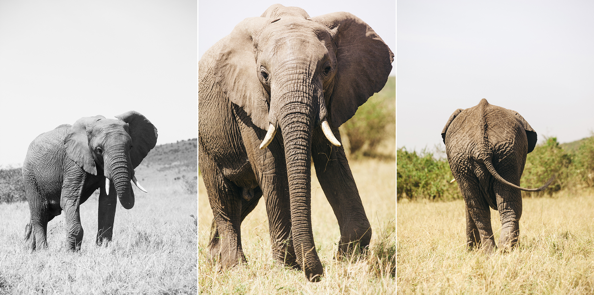 Kenya-113.jpg