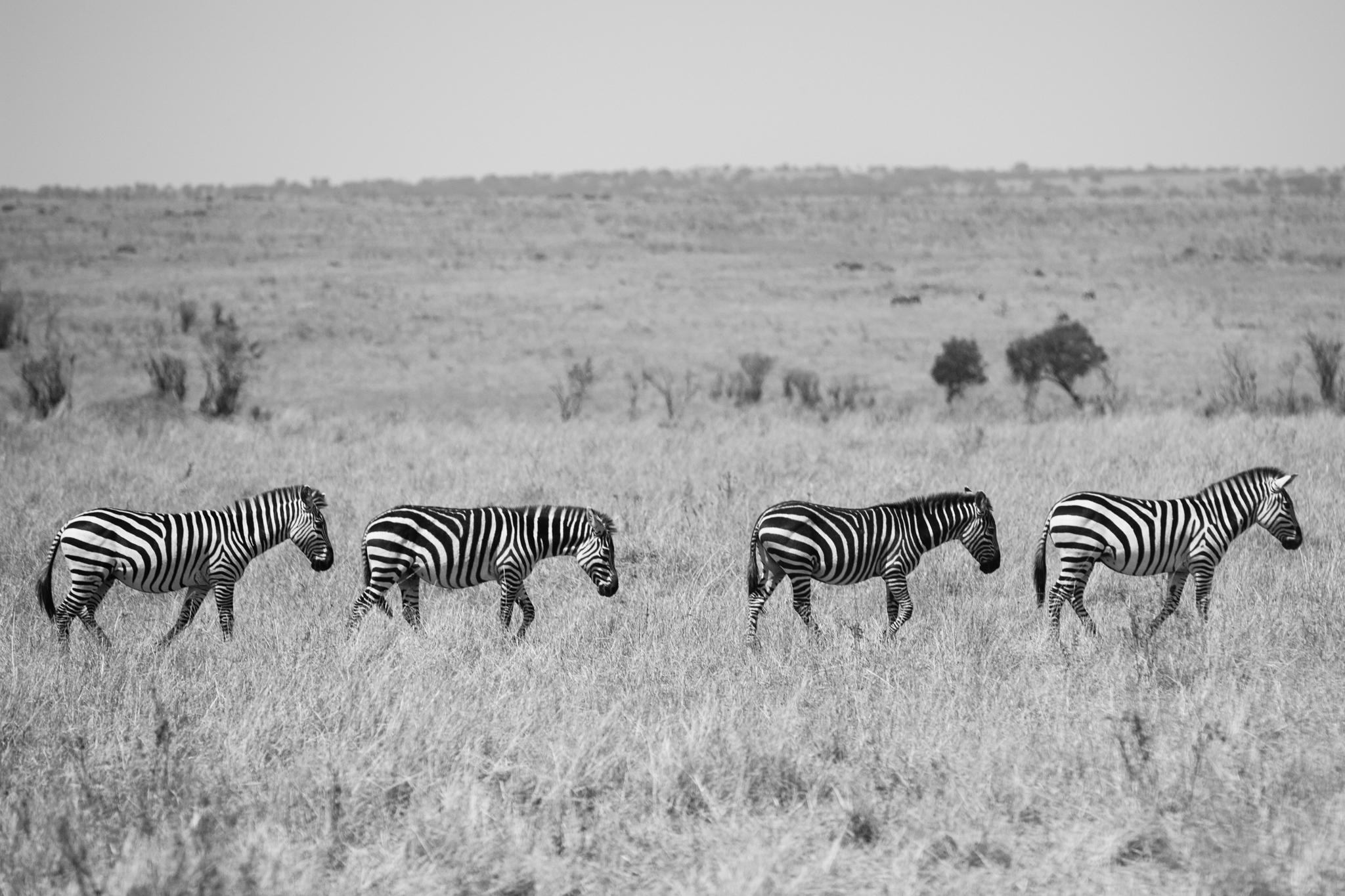Kenya-120.jpg