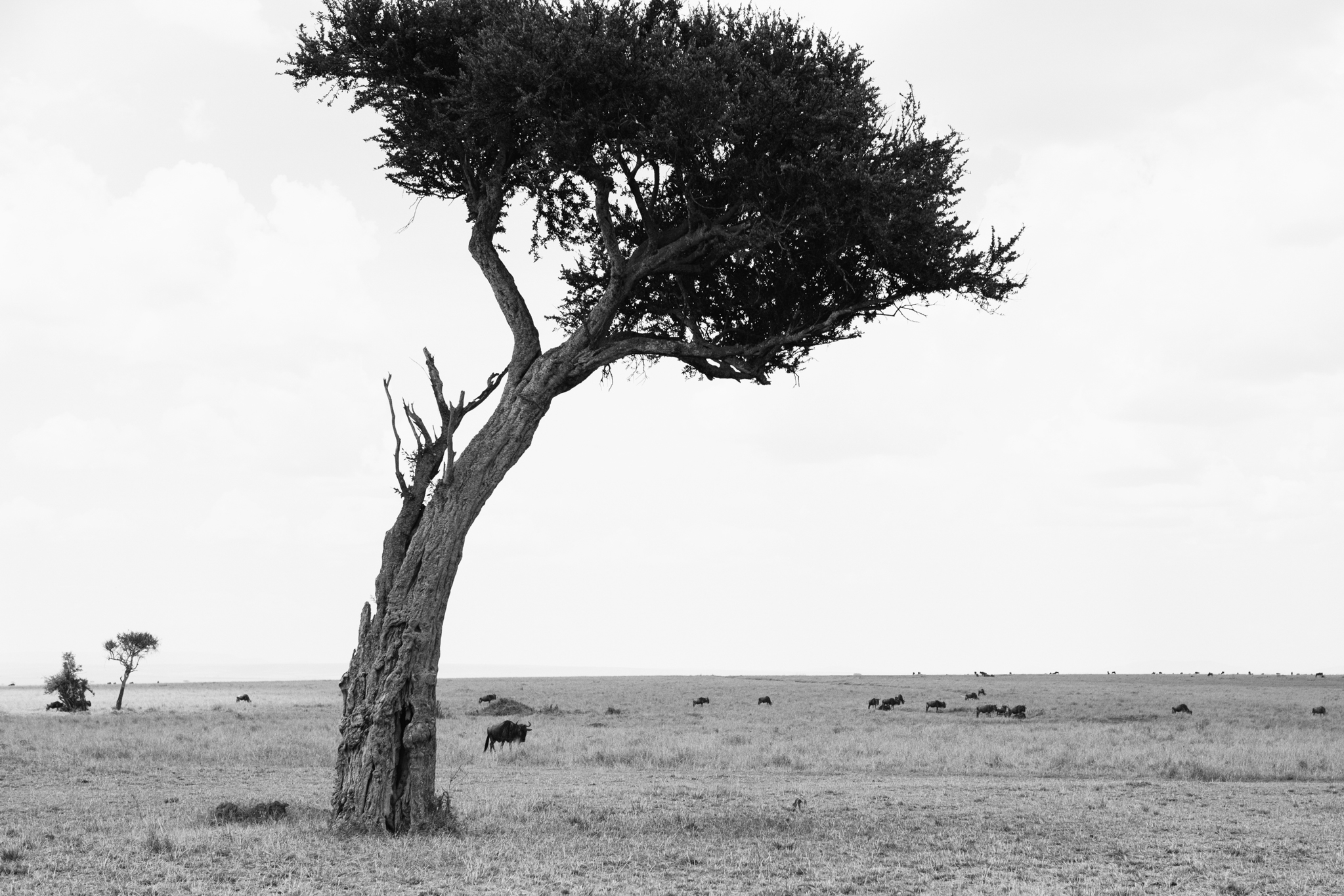 Kenya-140.jpg