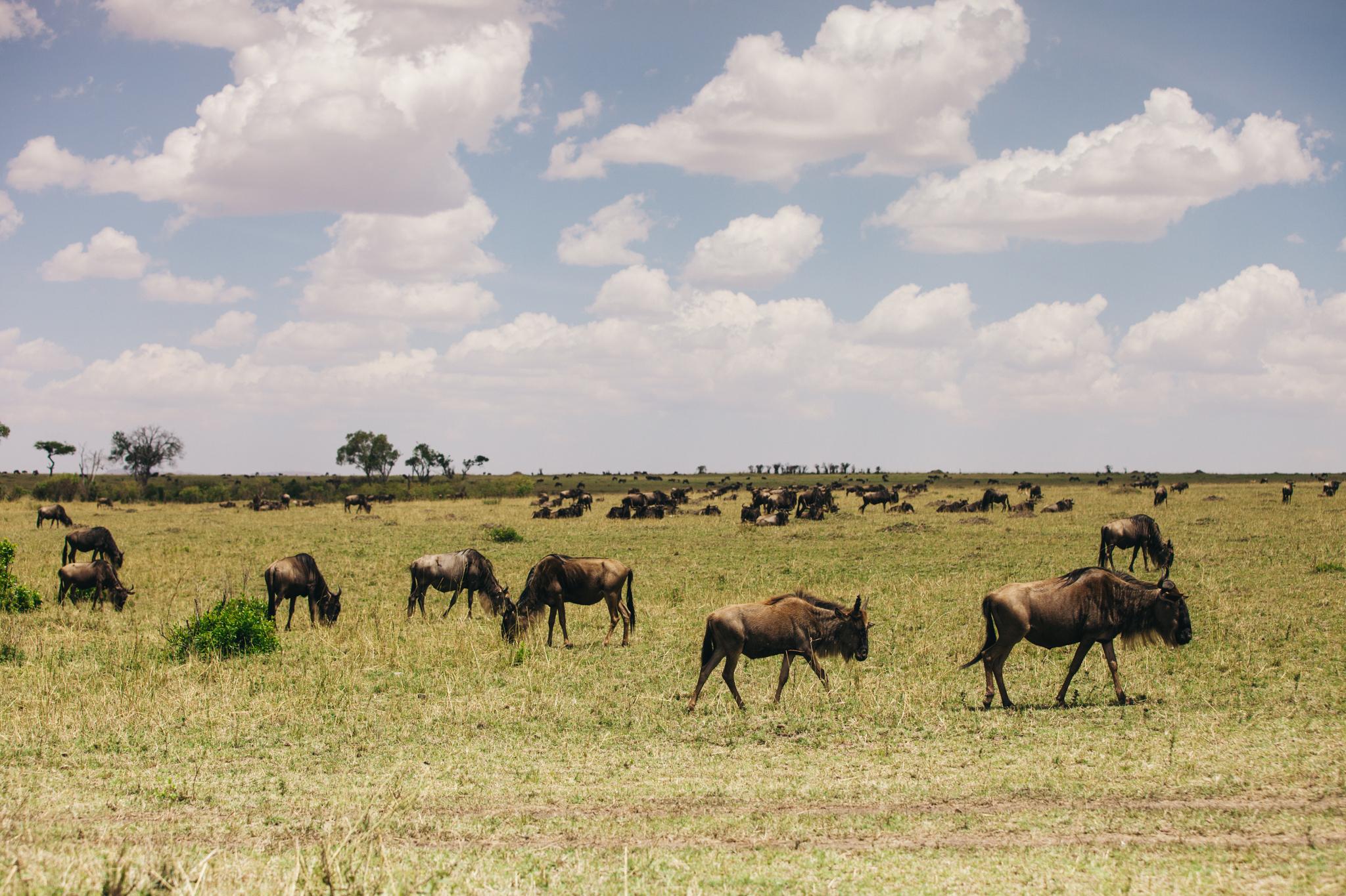 Kenya-149.jpg