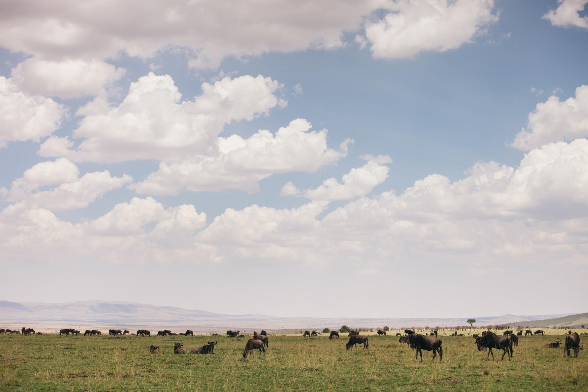 Kenya-150.jpg