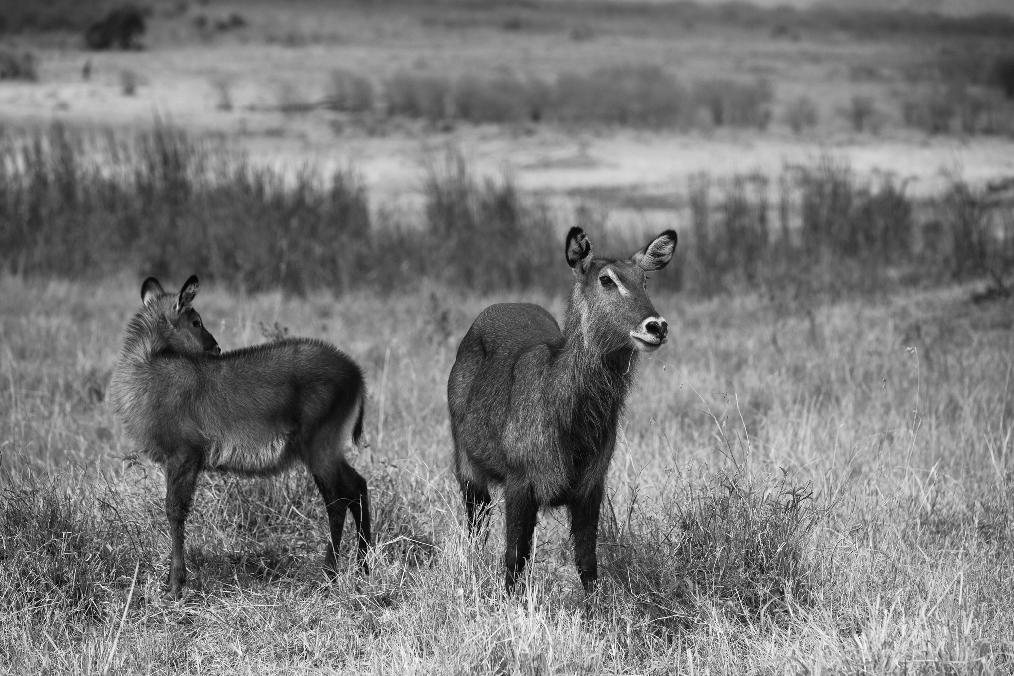 Kenya-155.jpg