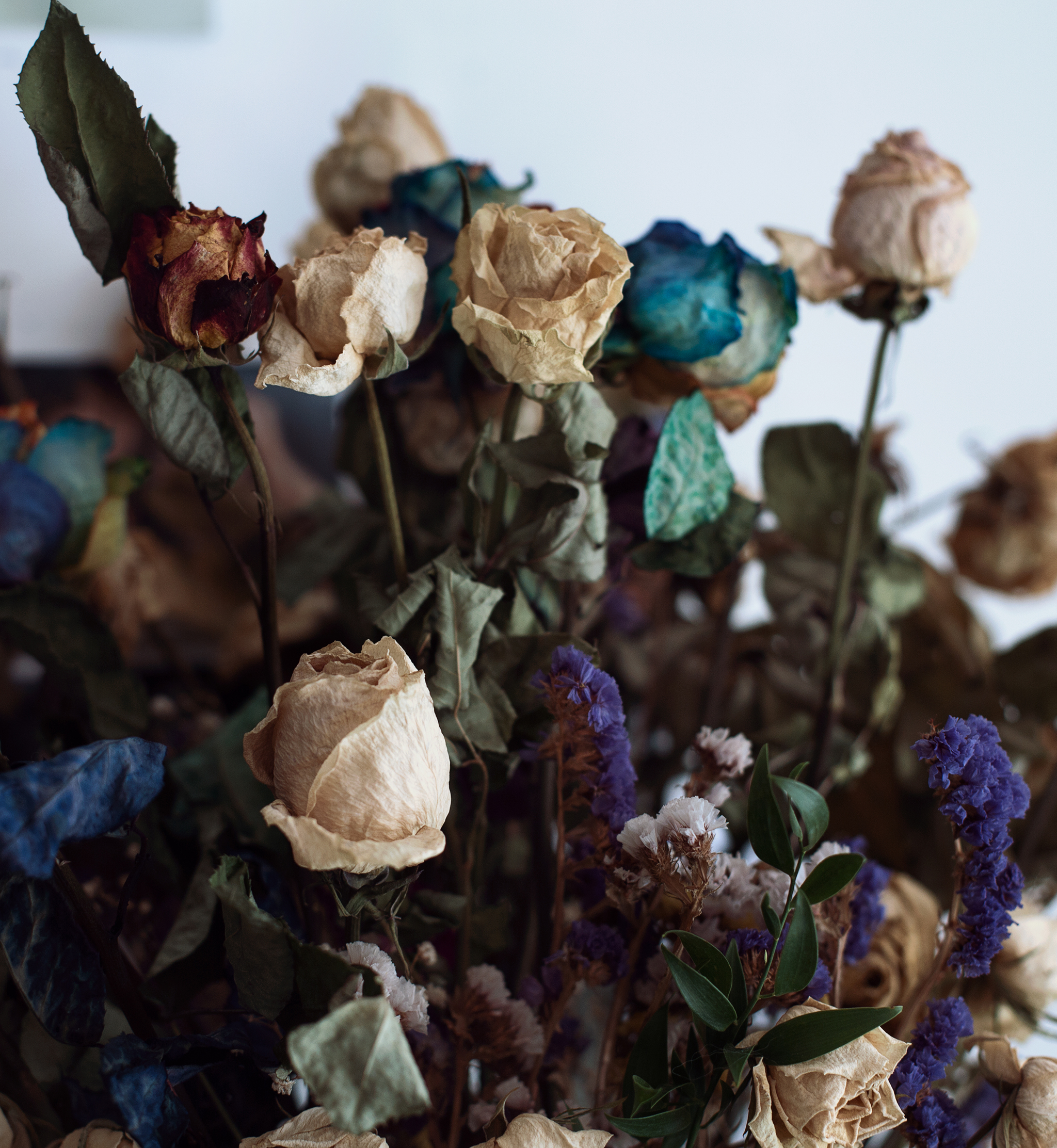 s_dried-flowers-roses-flora-age-dusky-withered.jpg