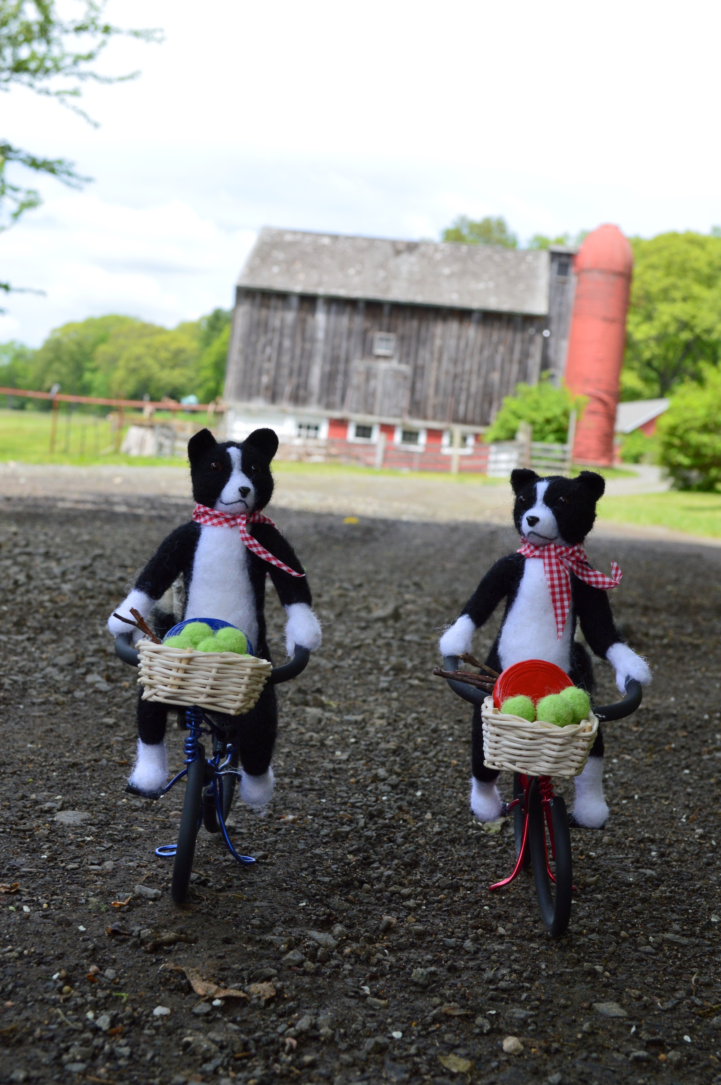 Border Collies on Vacation