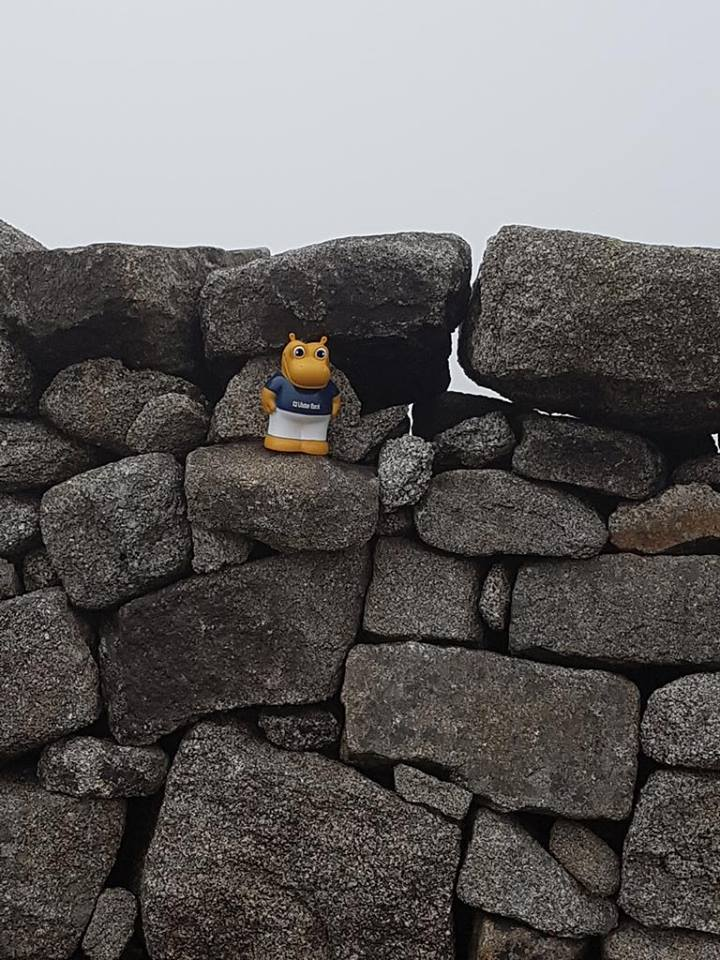 ...and not forgetting Henri who made it to the top of Slieve Donard too!.jpg