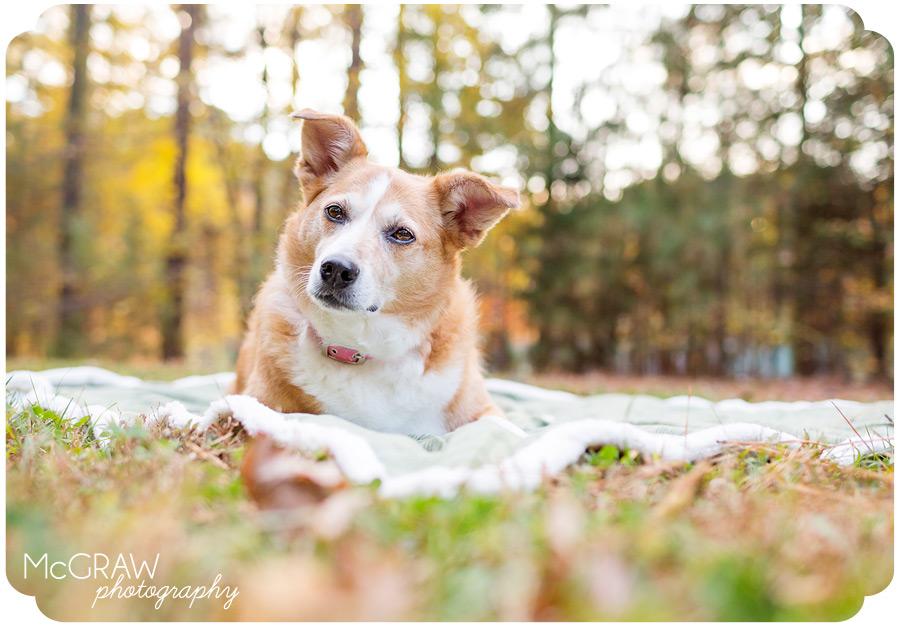 Charlotte NC Dog Photography