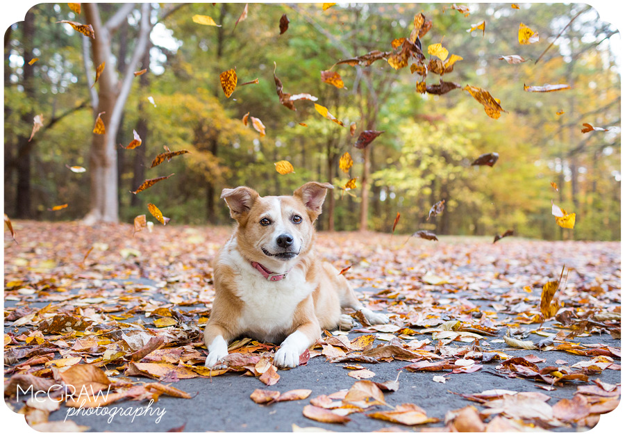 Fall Pet Session at Jetton Park