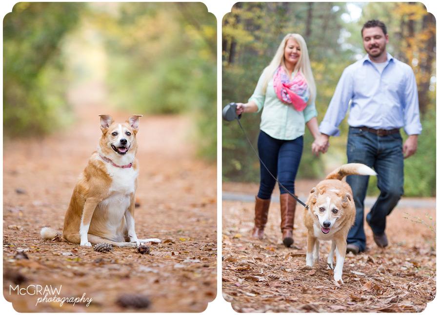 North Carolina Dog Photographer