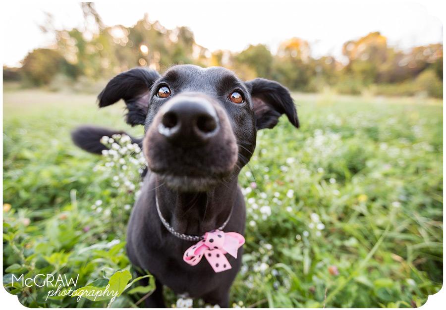 Charlotte NC Pet Photography