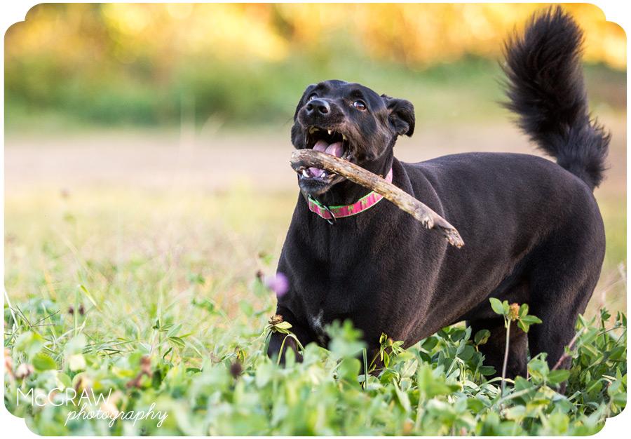 North Carolina Dog Photography