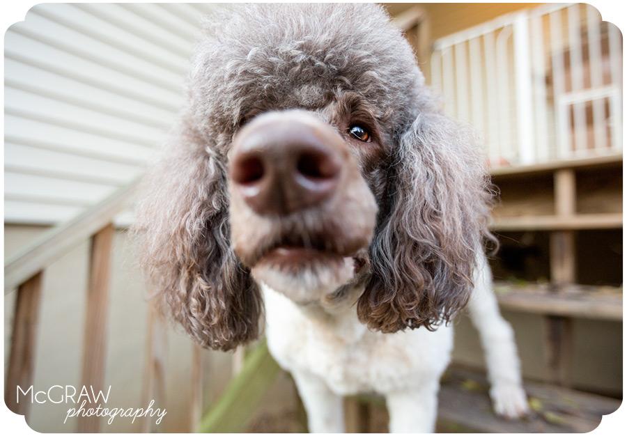 Dog Portrait Photos