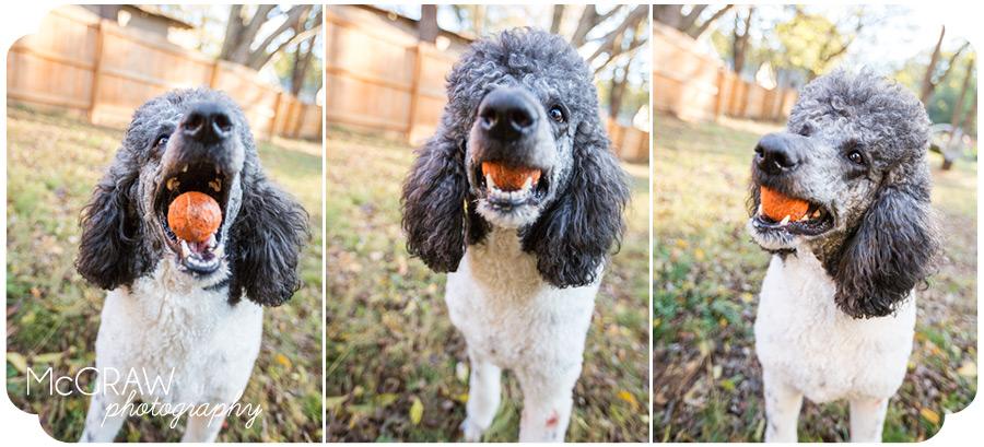 Mooresville Pet Portraits