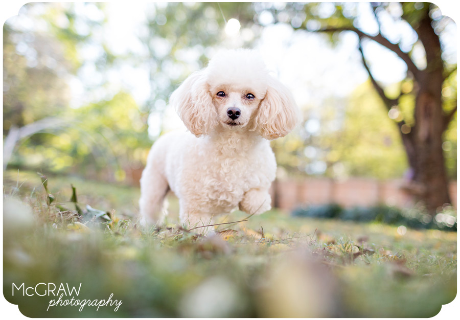 Modern Images for Posh Pets