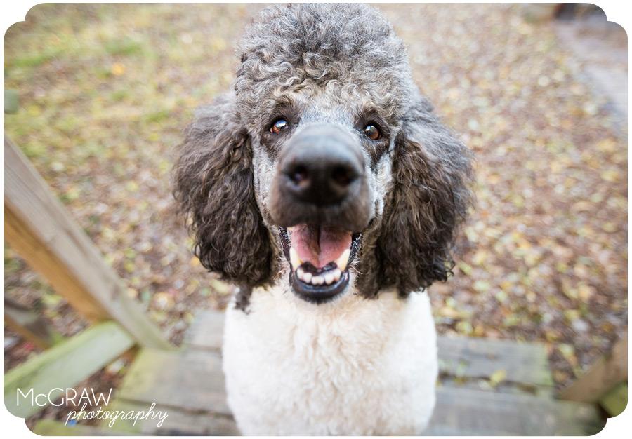 Fun Dog Portrait Photographer