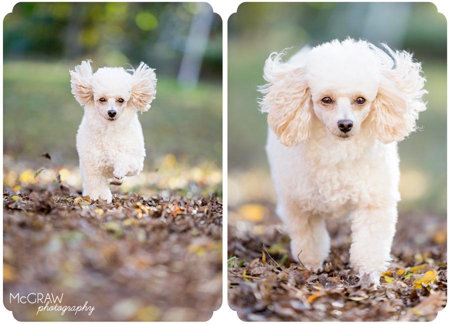 Mooresville NC Pet Photographer