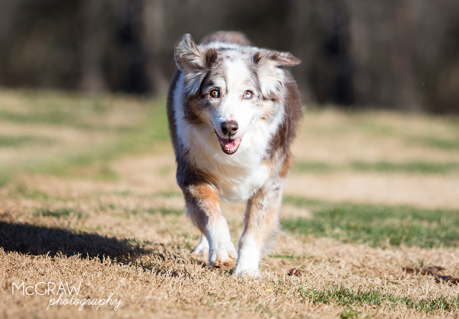 CharlotteNCPetPhotography