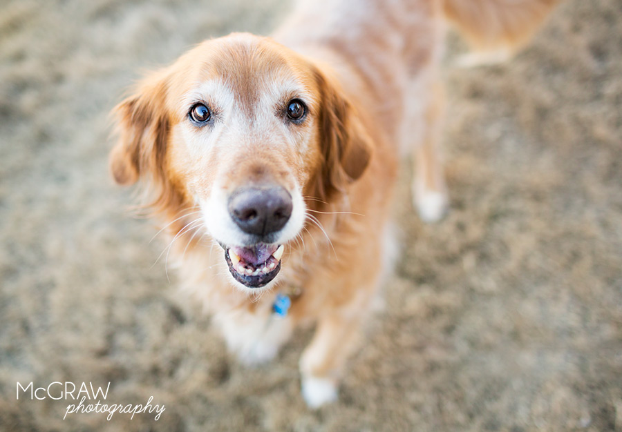 Charlotte Dog Portraits