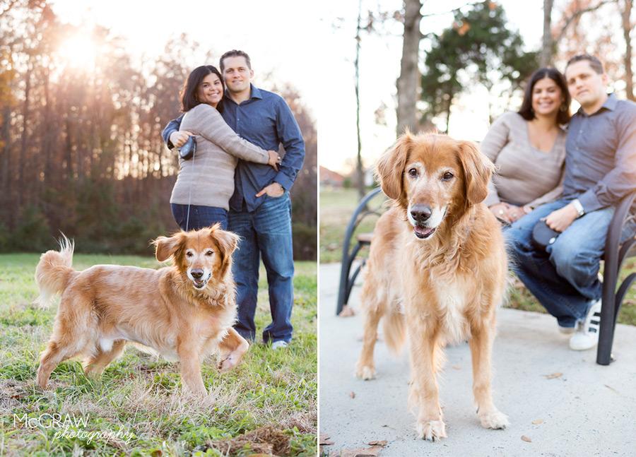 North Carolina Dog Portraits