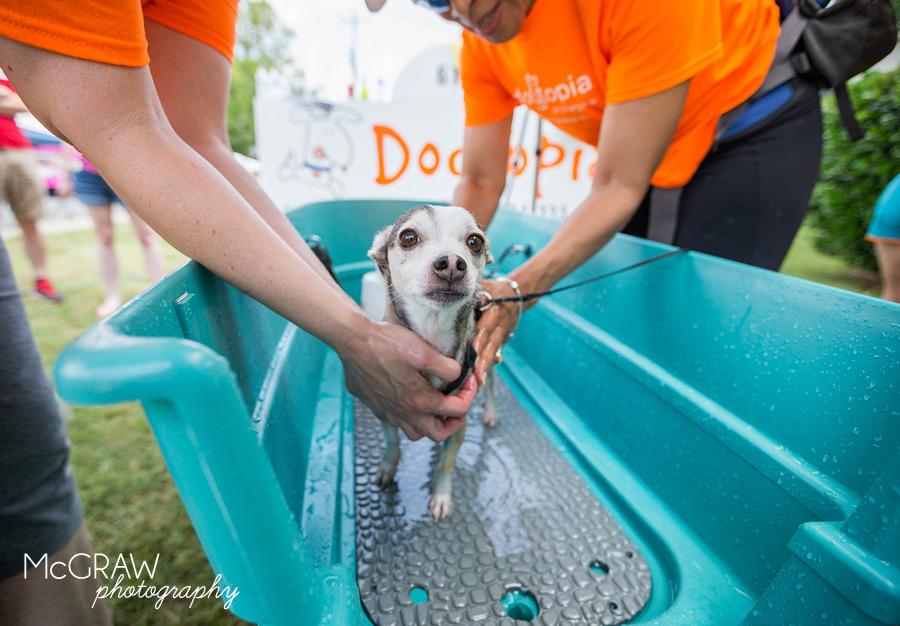 DogtopiaDogWash_13.jpg