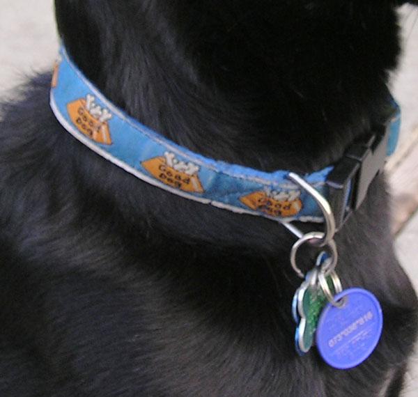 Dog collar SOCAH.jpg