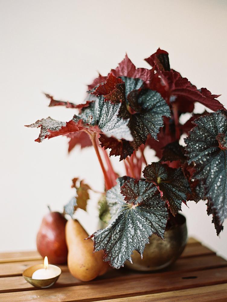 BFF Fall vashon Table Begonia