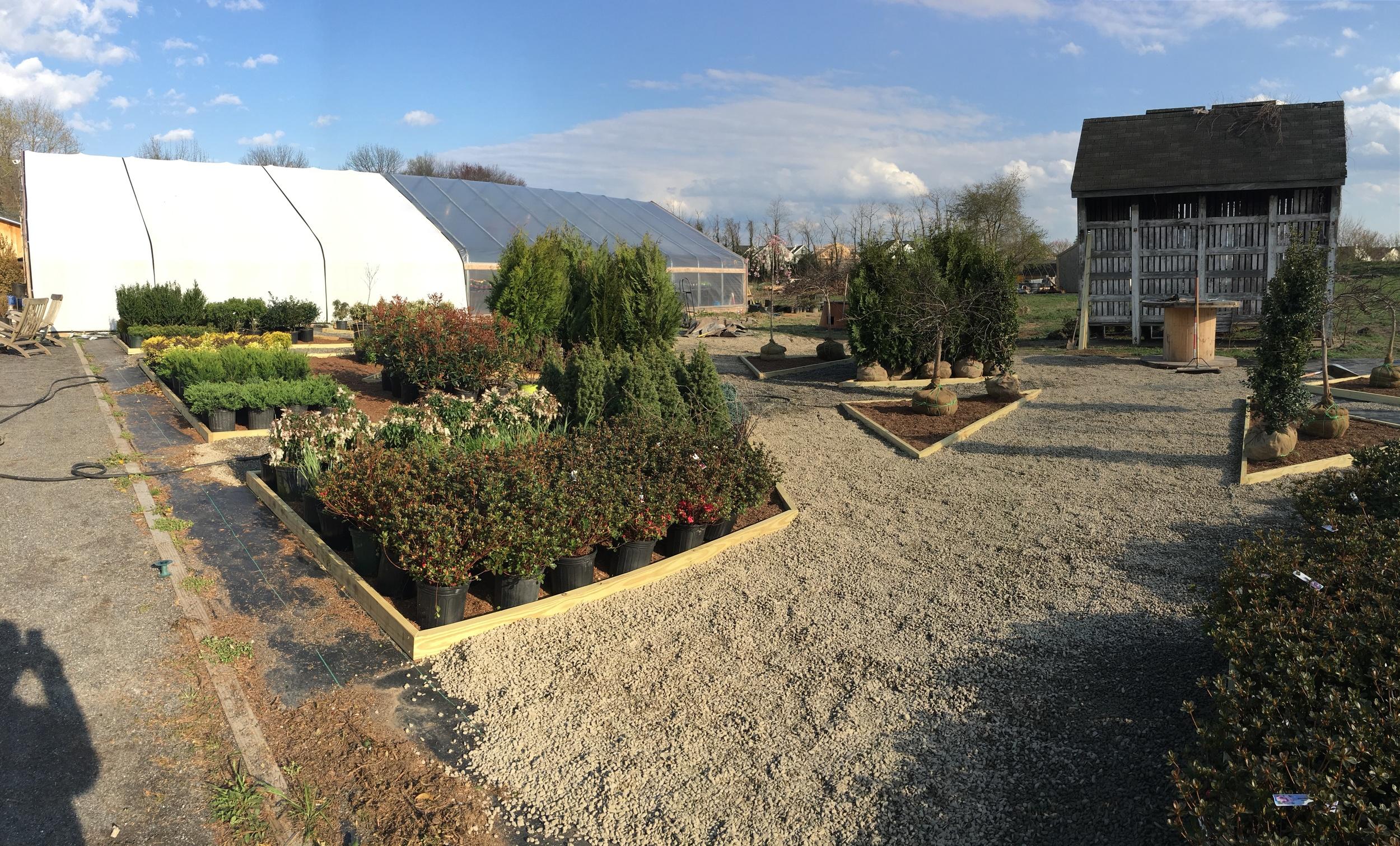 shrubs 2.jpg