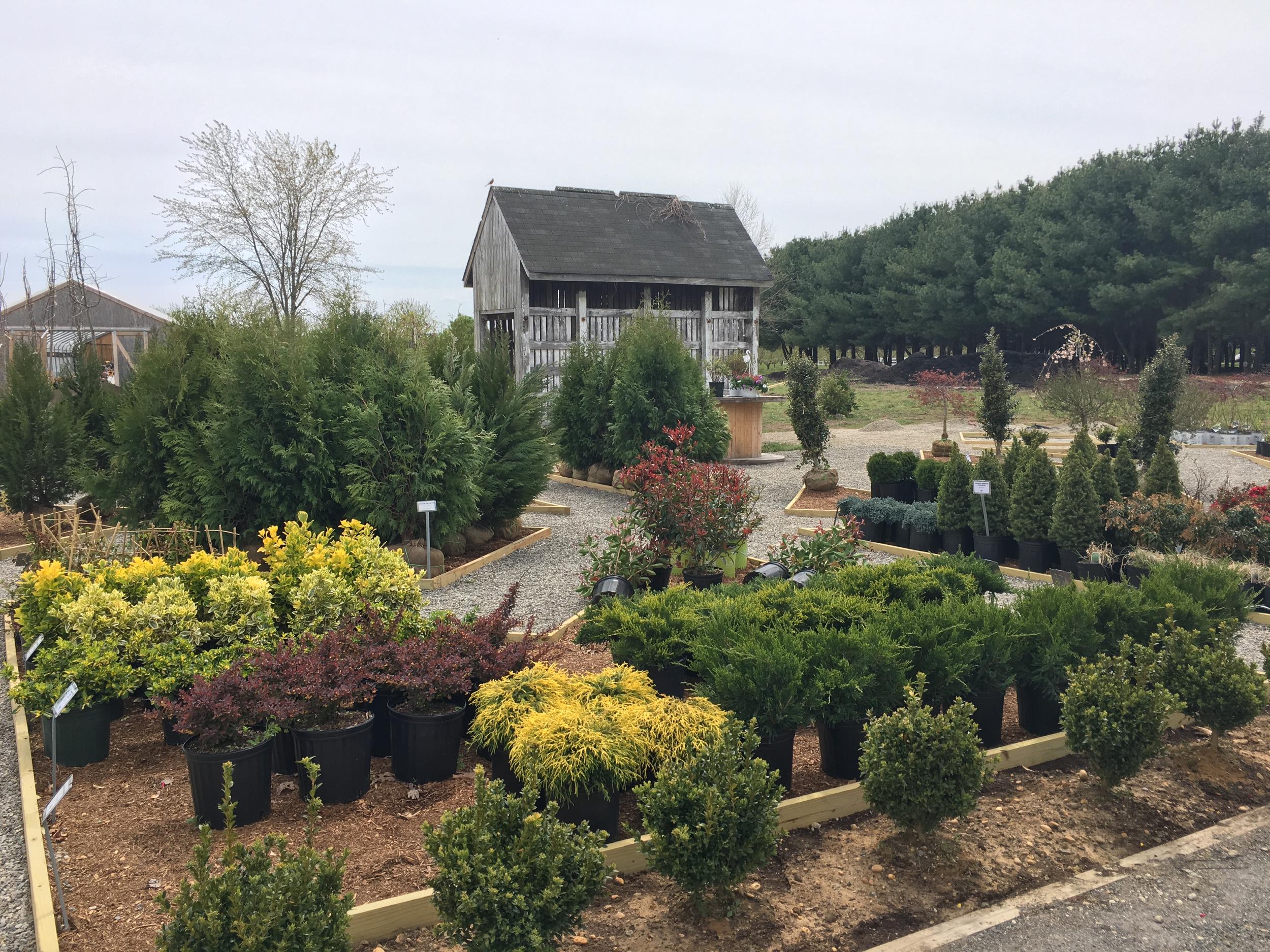shrubs 3.jpg