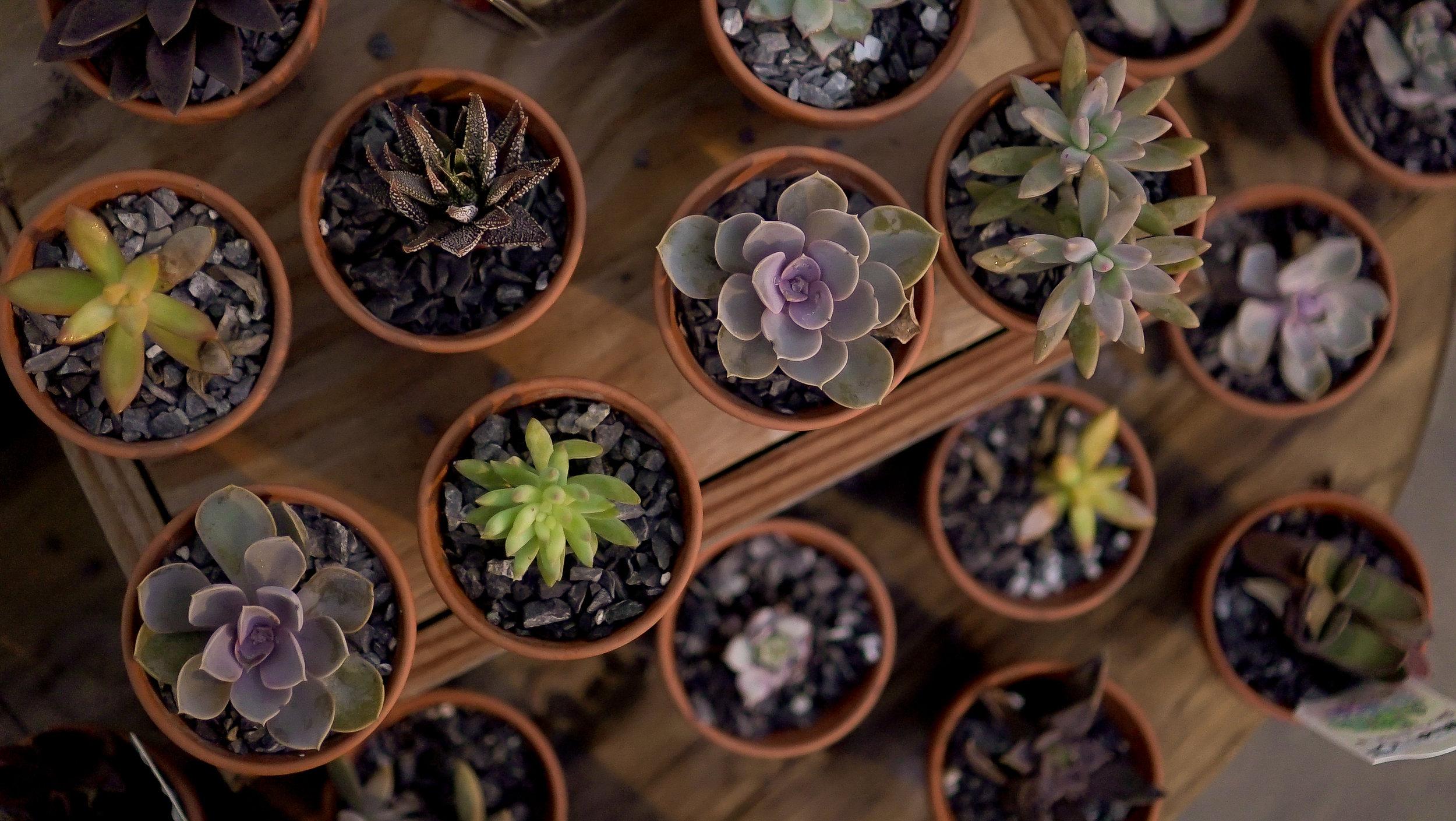 succulents copy.jpg
