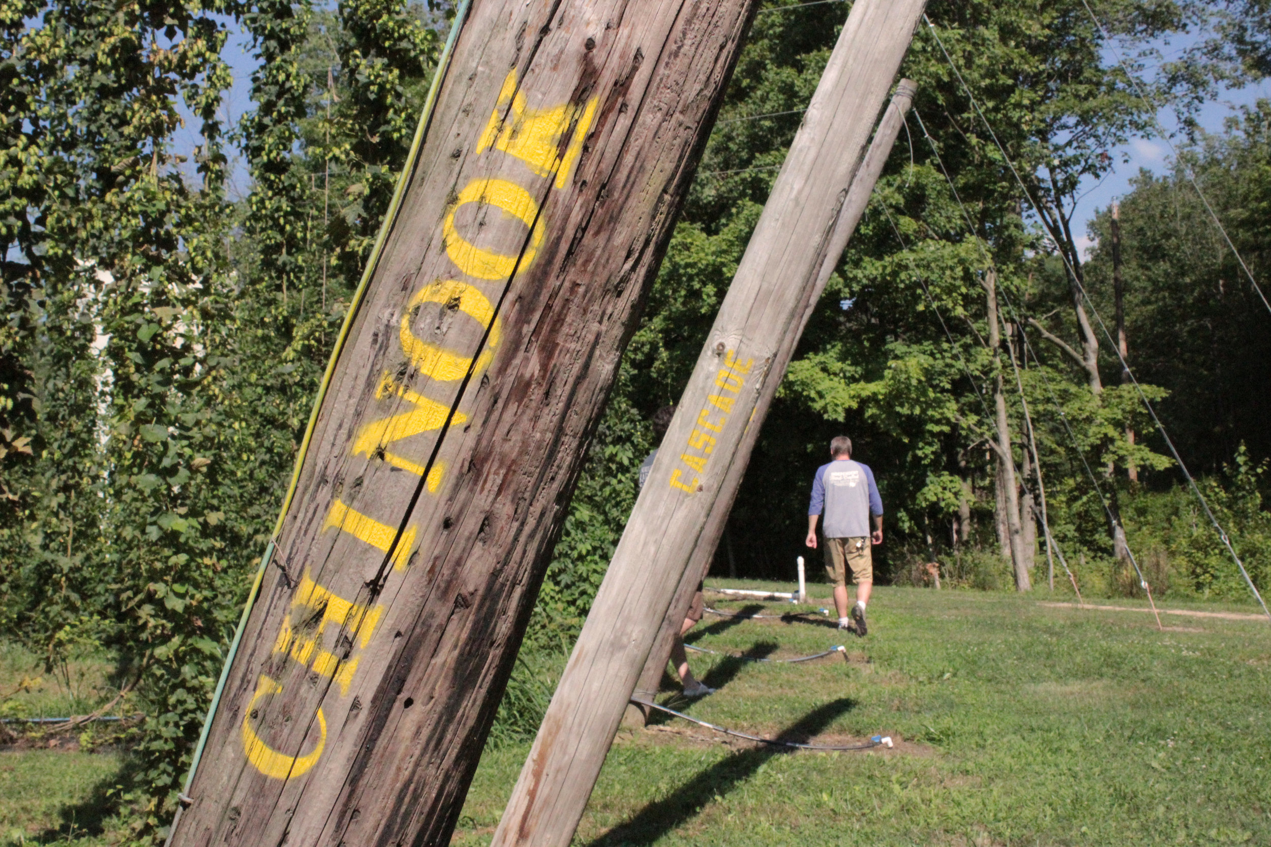 chinook pole hop yard.jpg