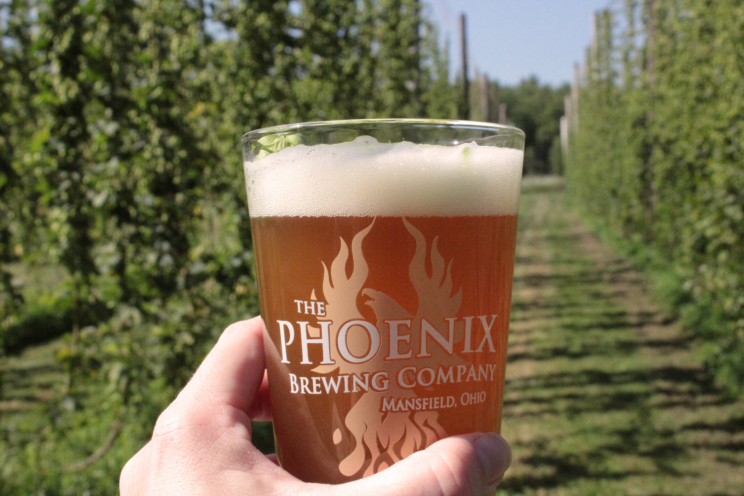 phoenix glass hop rows.jpg