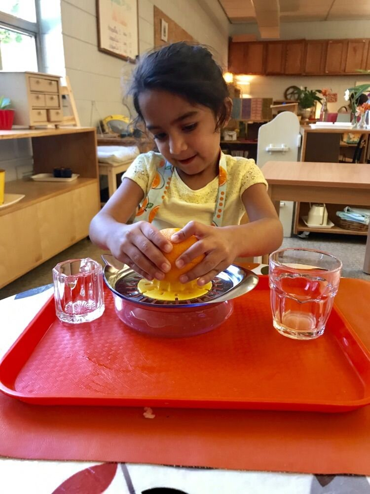 A four-year-old student uses the orange squeezing work to prepare juice. She uses a glass and metal citrus juicer, pours it into a glass pitcher, and finally into a child-sized glass to drink from. Her work isn't over until she has washed off all the pieces and returned it to the shelf. There is a lot of care and balance required for all these steps!