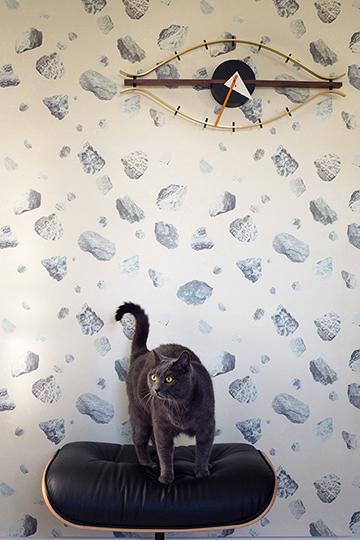 Kitty Rock.jpg