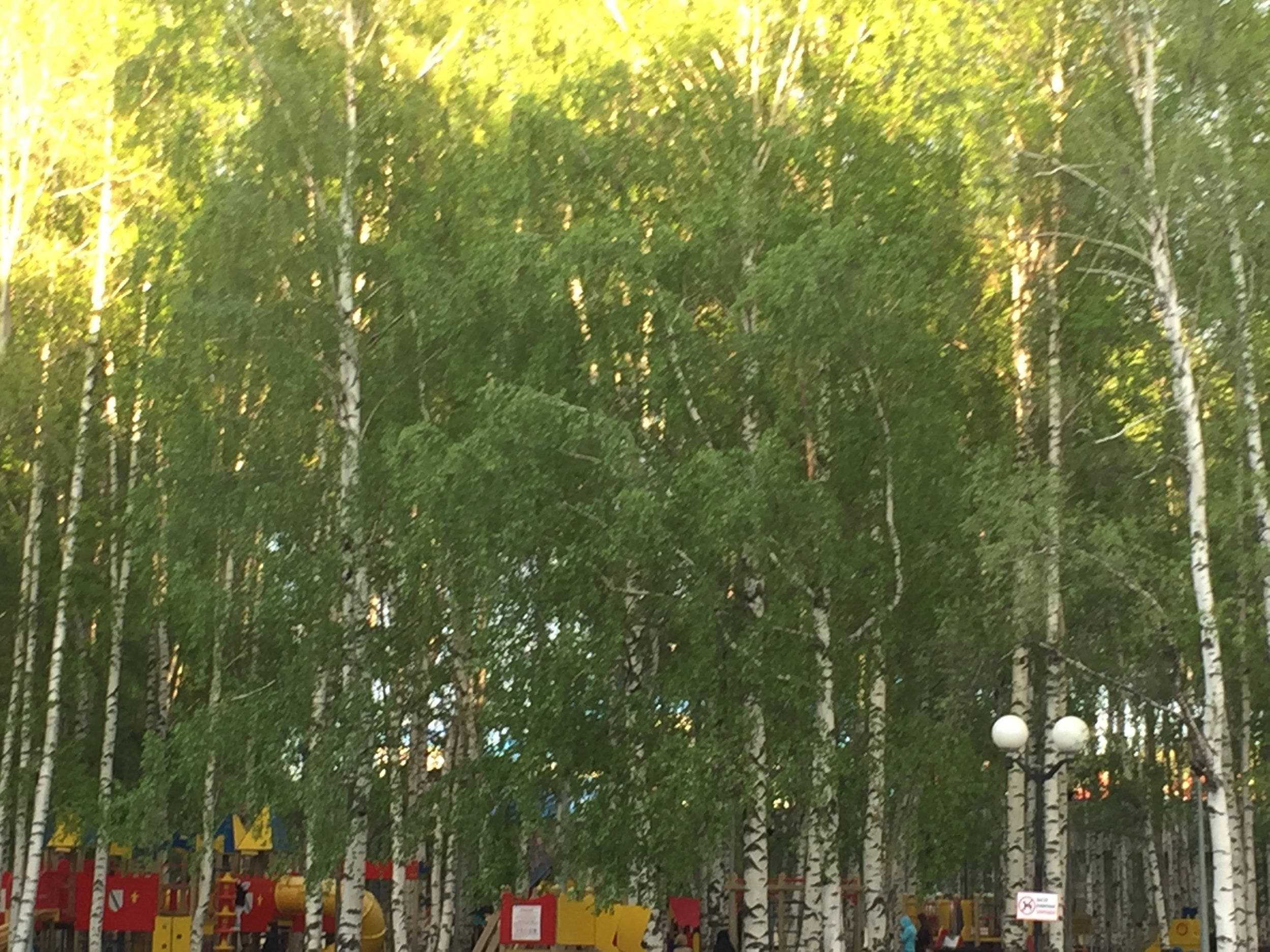 This beautiful birch park is right in town. Some interesting monuments to history here.