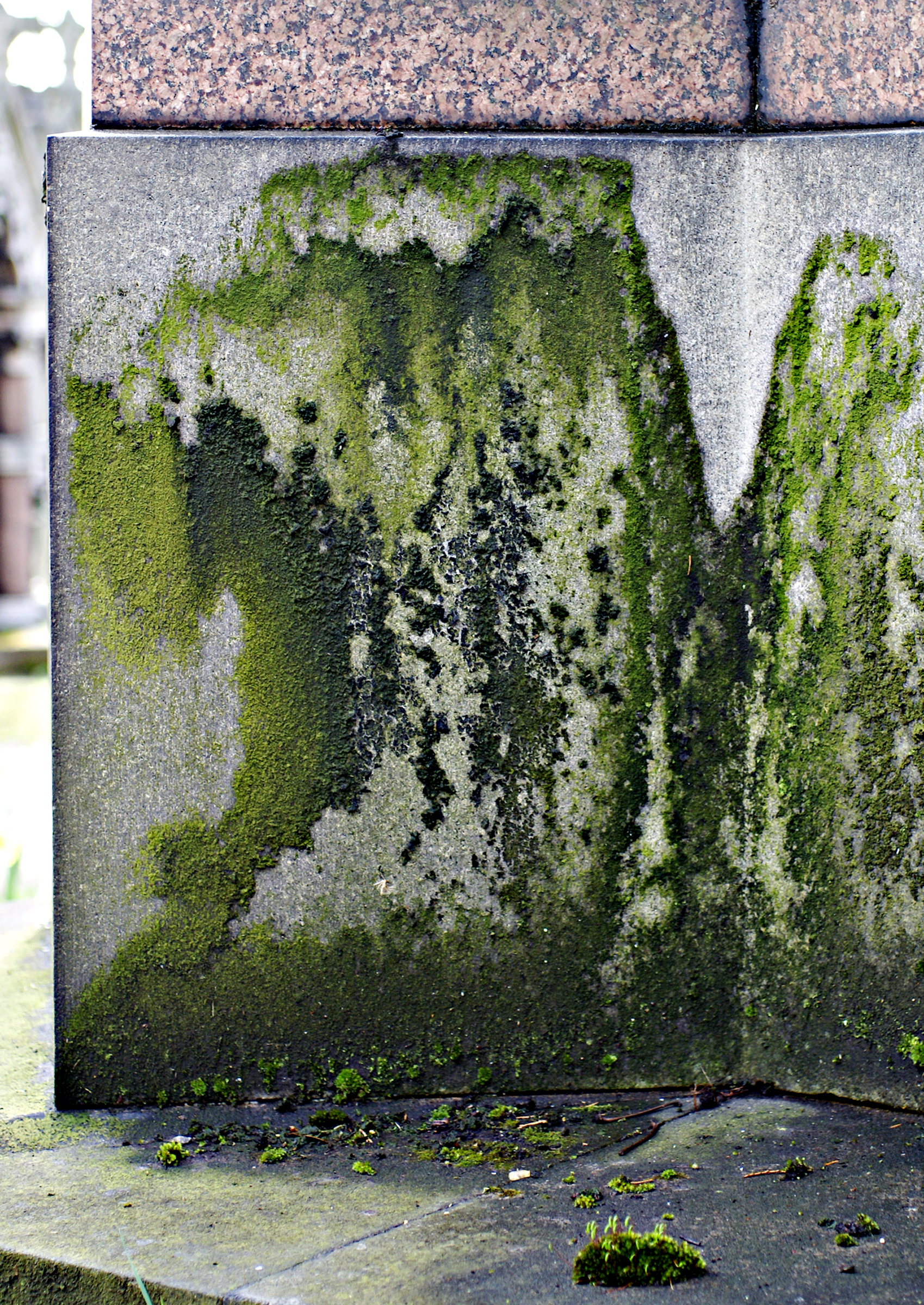 strong moss mold on foundation tomb.jpg