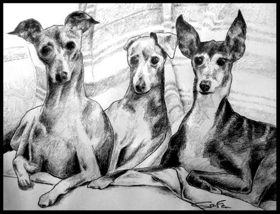 dogs final ok 2.jpg