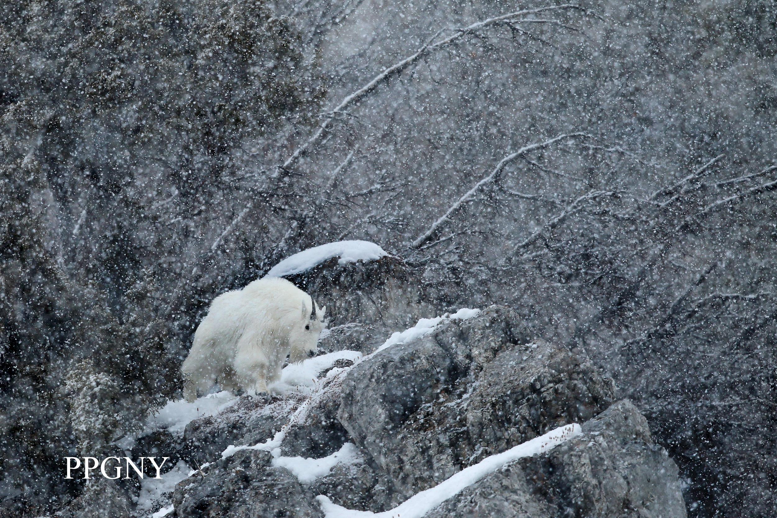 Winter_Magic.jpg