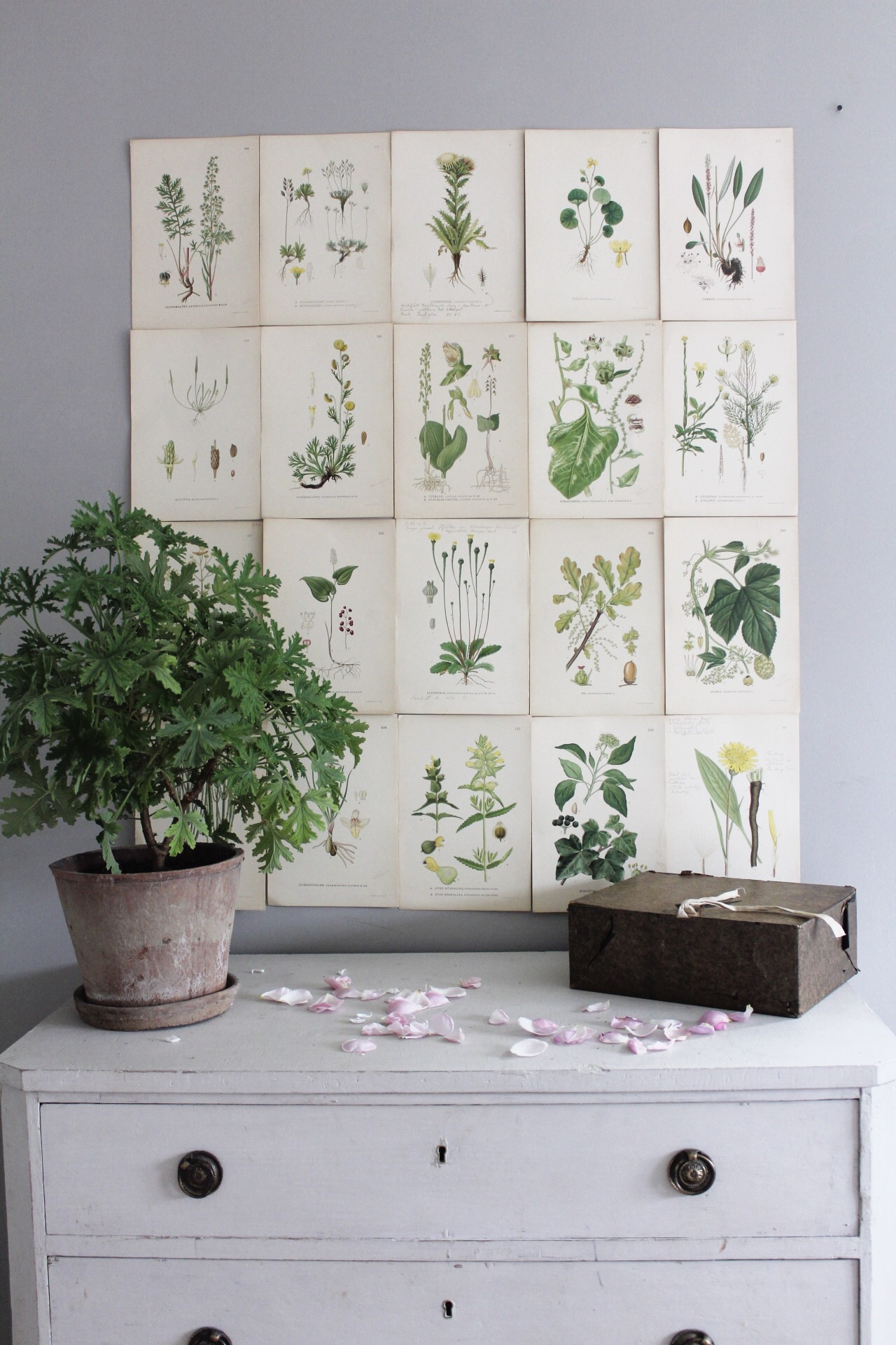 We currently got a big selection of Swedish botanical prints, Nordens Flora. £7.50 each ( 24 cm X 16.5 )