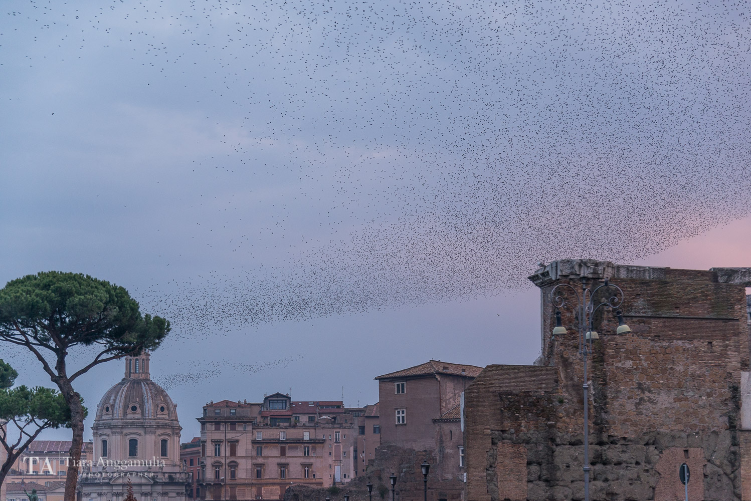A flock of birds flying over Rome.