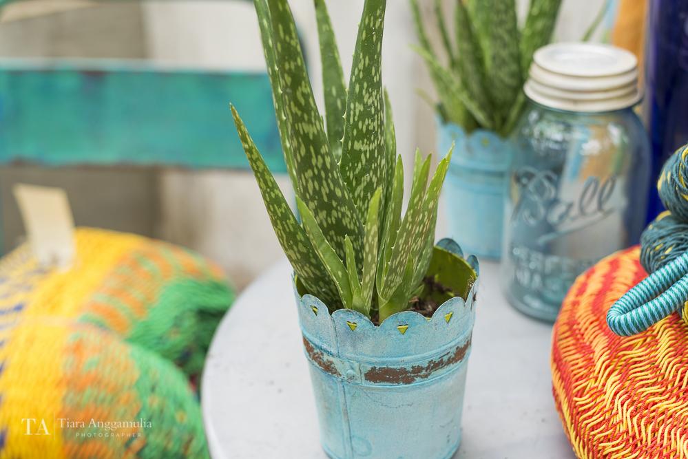 Aloe vera in a blue tin pot.