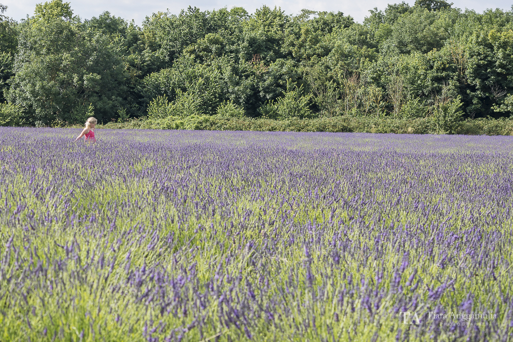 A view towards the lavender field.