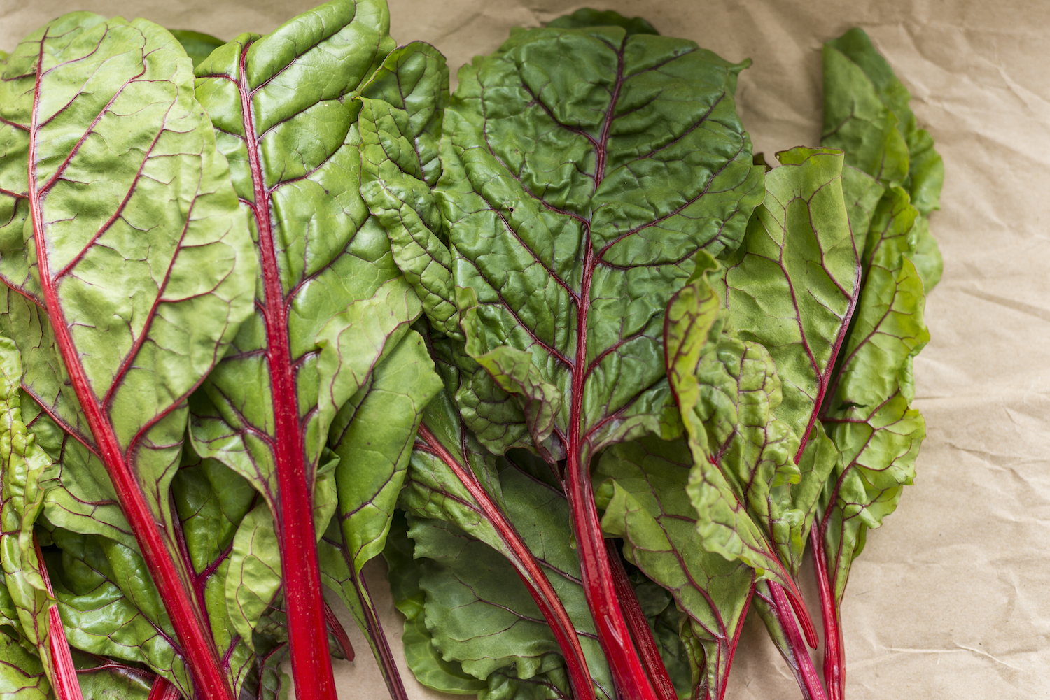 Freshly picked red chard from the farm.jpg