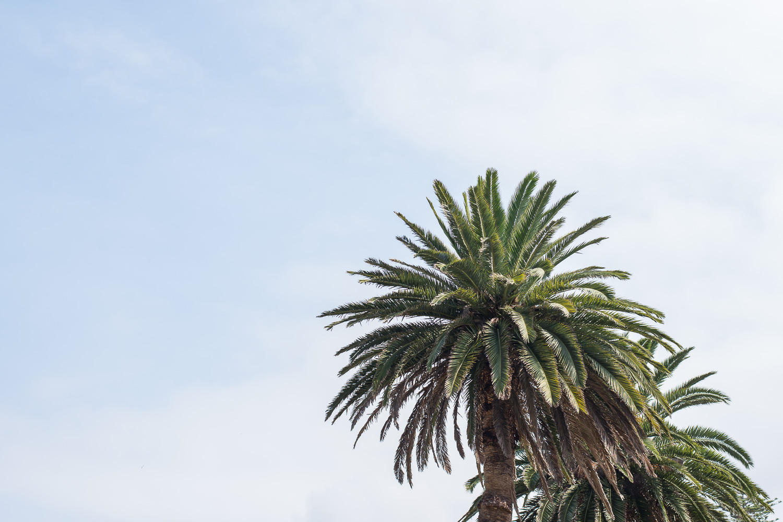 Green palm trees.jpg