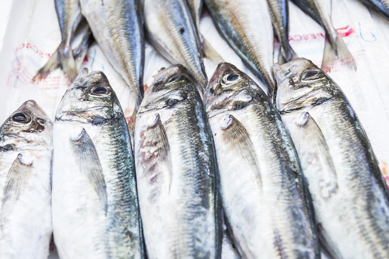 Fresh sardines for sale.jpg