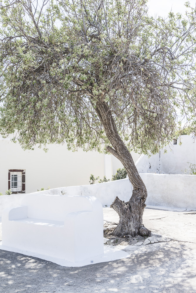 A white bench under a tree.