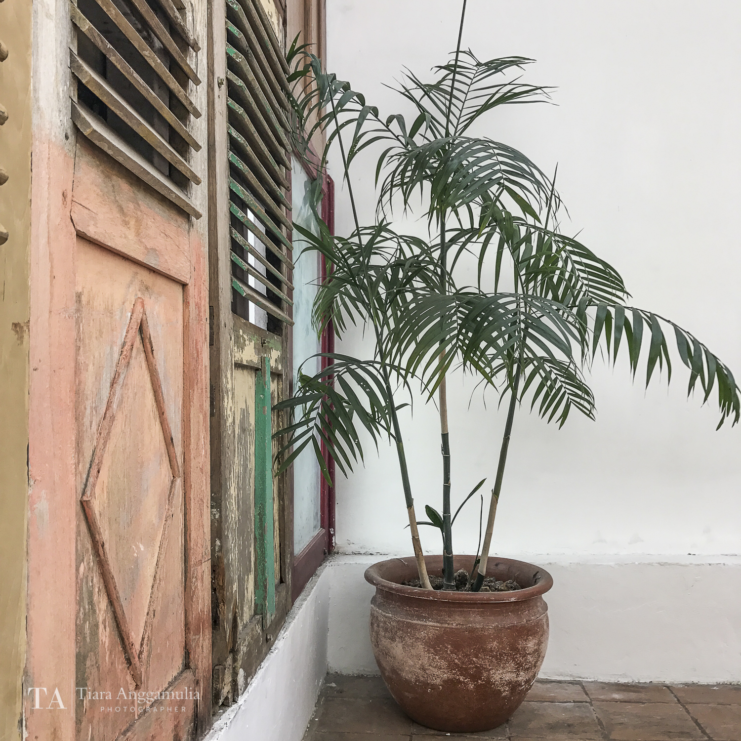 Palm tree in a pot inside Adhisthana hotel.